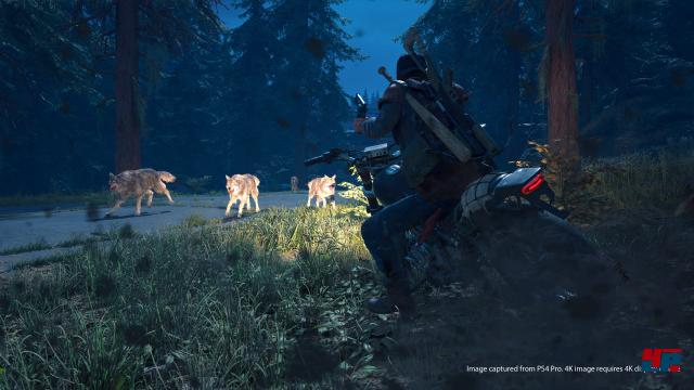 Screenshot - Days Gone (PS4)