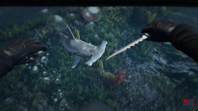 Auch unter Wasser gibt es Neues zu entdecken.