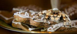 Toast Recon und weitere Kuriositäten